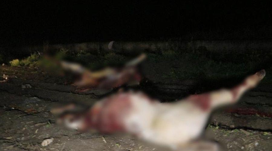 Yeni Mesaj: Adana'da boş arazide kesilmiş 3 at ele geçirildi
